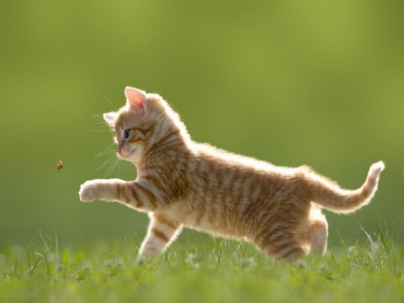 urne per gatti
